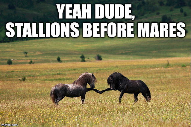 Horse's agree bros before hoes | YEAH DUDE, STALLIONS BEFORE MARES | image tagged in just horsing around,bros | made w/ Imgflip meme maker