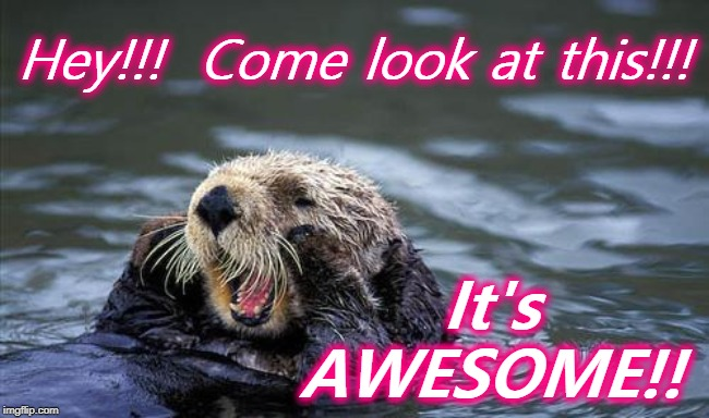 Shouting otter | Hey!!!  Come look at this!!! It's AWESOME!! | image tagged in shouting otter | made w/ Imgflip meme maker