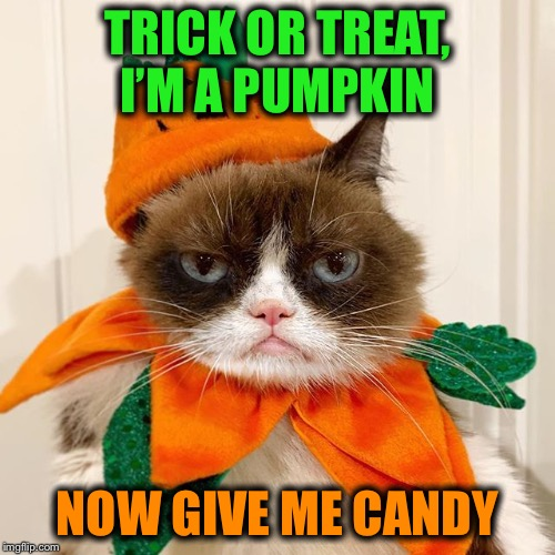 And hurry it up because I got other houses to hit | TRICK OR TREAT, I'M A PUMPKIN NOW GIVE ME CANDY | image tagged in grumpy cat halloween,pumpkin,costume,memes,funny | made w/ Imgflip meme maker