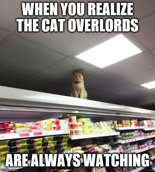 cat watching you | WHEN YOU REALIZE THE CAT OVERLORDS ARE ALWAYS WATCHING | image tagged in cat watching you | made w/ Imgflip meme maker