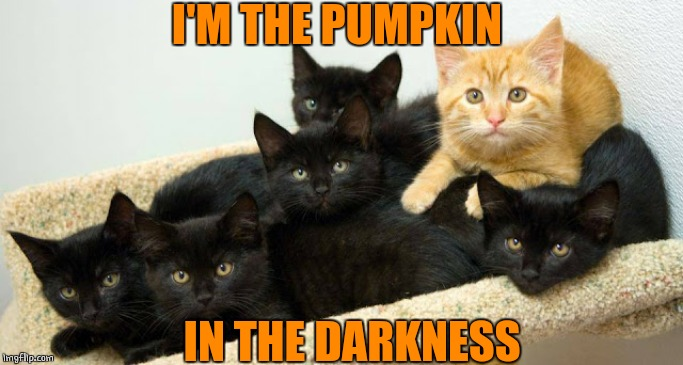 ORANGE CAT |  I'M THE PUMPKIN; IN THE DARKNESS | image tagged in cats,pumpkin,halloween | made w/ Imgflip meme maker