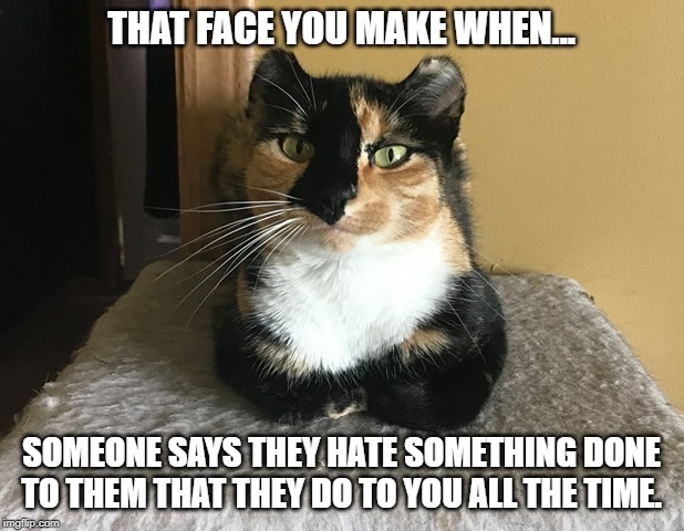 Mabel | THAT FACE YOU MAKE WHEN... SOMEONE SAYS THEY HATE SOMETHING DONE TO THEM THAT THEY DO TO YOU ALL THE TIME. | image tagged in mabel,cats,cat,sarcastic,sarcasm | made w/ Imgflip meme maker