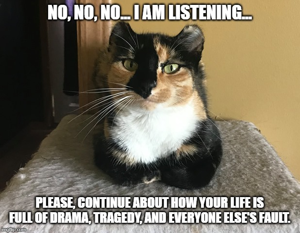 Mabel | NO, NO, NO... I AM LISTENING... PLEASE, CONTINUE ABOUT HOW YOUR LIFE IS FULL OF DRAMA, TRAGEDY, AND EVERYONE ELSE'S FAULT. | image tagged in mabel,cats,cat,sarcastic,sarcasm | made w/ Imgflip meme maker
