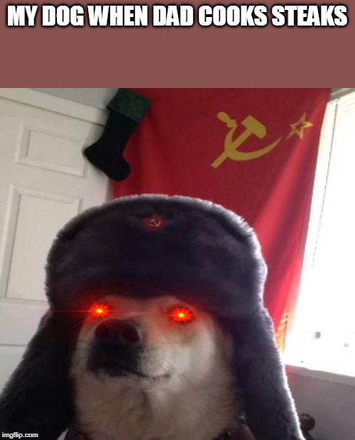 Russian Doge | MY DOG WHEN DAD COOKS STEAKS | image tagged in russian doge | made w/ Imgflip meme maker