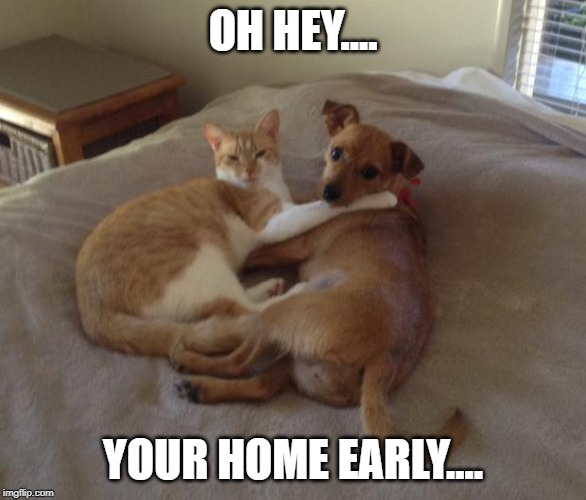 Cats and dogs living together | OH HEY.... YOUR HOME EARLY.... | image tagged in cats and dogs living together | made w/ Imgflip meme maker