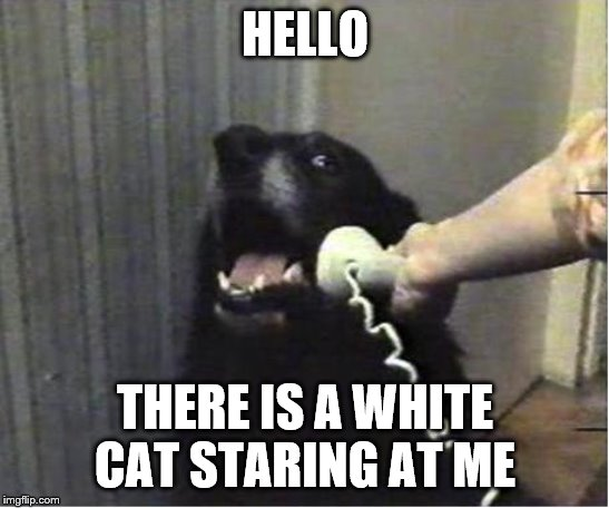 "Apparently ""racism"" can now spread over multiple species 