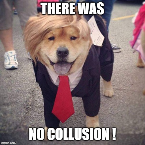 Trump Dog | THERE WAS NO COLLUSION ! | image tagged in trump dog | made w/ Imgflip meme maker