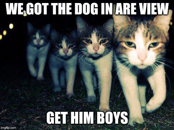 Wrong Neighboorhood Cats | WE GOT THE DOG IN ARE VIEW GET HIM BOYS | image tagged in memes,wrong neighboorhood cats | made w/ Imgflip meme maker