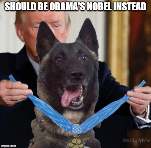 Deserves a Nobel more than Obama EVER did |  SHOULD BE OBAMA'S NOBEL INSTEAD | image tagged in al-baghdadi dead,donald trump,medal of honor | made w/ Imgflip meme maker
