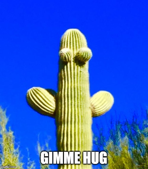 Huggy Cactus  | GIMME HUG | image tagged in huggy cactus | made w/ Imgflip meme maker
