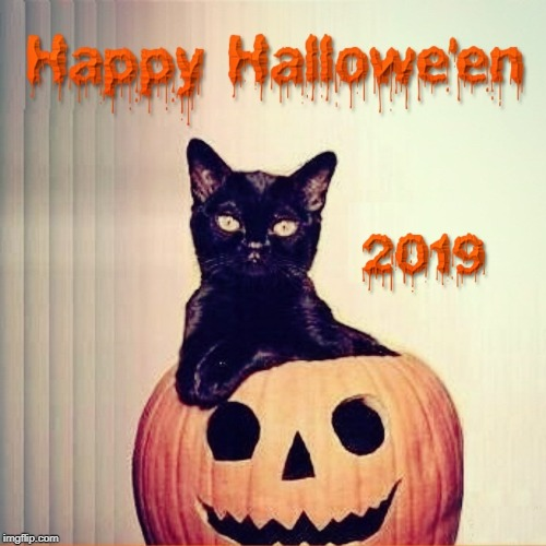 image tagged in pumpkin,happy halloween,halloween,kitty | made w/ Imgflip meme maker