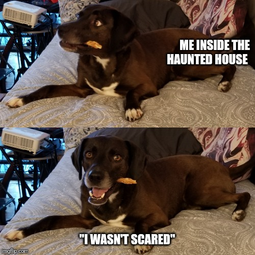 "ME INSIDE THE HAUNTED HOUSE ""I WASN'T SCARED"" 