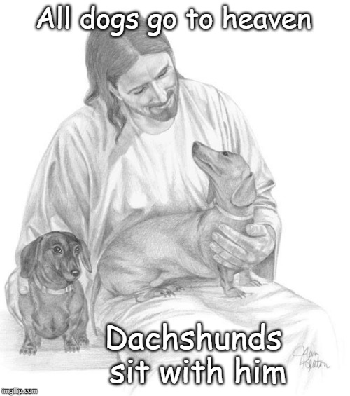 All dogs go to heaven Dachshunds sit with him | All dogs go to heaven Dachshunds  sit with him | image tagged in dachshunds,christian,dogs,love,joy,tears of joy | made w/ Imgflip meme maker