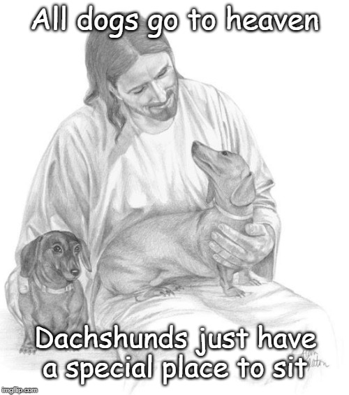 All dogs go to heaven Dachshunds have a special place to sit | All dogs go to heaven Dachshunds just have a special place to sit | image tagged in dachshunds,dogs,christian,love,special,jesus | made w/ Imgflip meme maker