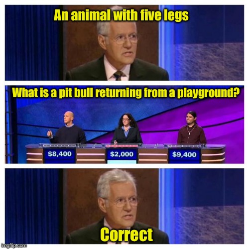 Jeopardy | An animal with five legs What is a pit bull returning from a playground? Correct | image tagged in jeopardy | made w/ Imgflip meme maker