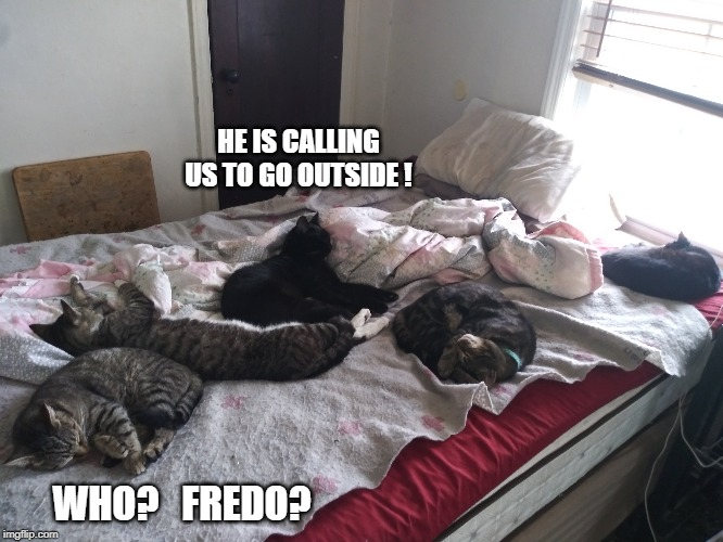 HEY I HEARD THAT! | HE IS CALLING US TO GO OUTSIDE ! WHO?   FREDO? | image tagged in cats,funny cats,animals,pets | made w/ Imgflip meme maker
