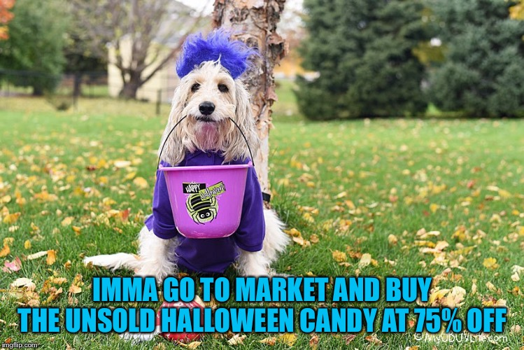 IMMA GO TO MARKET AND BUY THE UNSOLD HALLOWEEN CANDY AT 75% OFF | image tagged in halloween dawg | made w/ Imgflip meme maker