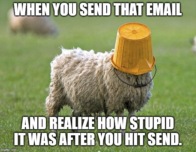 stupid sheep |  WHEN YOU SEND THAT EMAIL; AND REALIZE HOW STUPID IT WAS AFTER YOU HIT SEND. | image tagged in stupid sheep | made w/ Imgflip meme maker