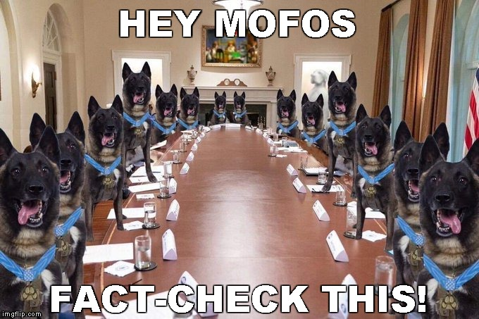 "Washington Post ""fact-checks"" Dog Meme 