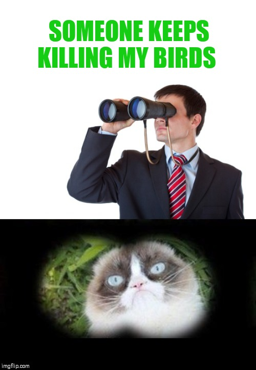 SOMEONE KEEPS KILLING MY BIRDS | image tagged in grumpy cat,binoculars | made w/ Imgflip meme maker