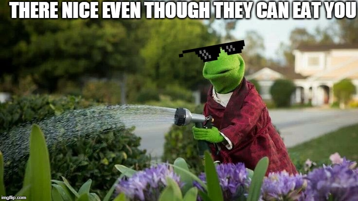 Kermit Plants | THERE NICE EVEN THOUGH THEY CAN EAT YOU | image tagged in kermit plants | made w/ Imgflip meme maker