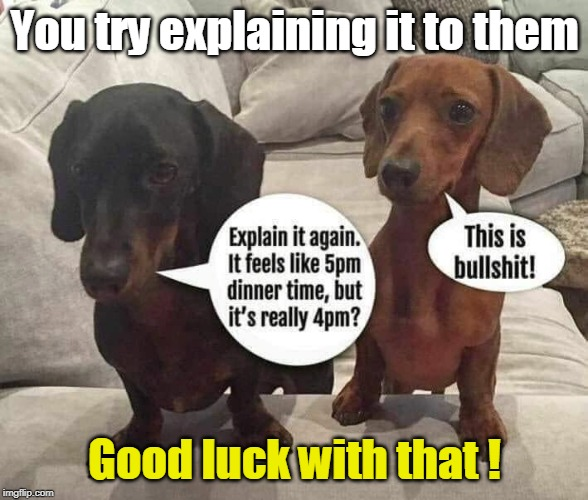 Daylight Savings Time - Dogs | You try explaining it to them Good luck with that ! | image tagged in daylight savings time,dachshunds,dogs,funny memes,feeding,bullshit | made w/ Imgflip meme maker