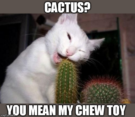 CACTUS? YOU MEAN MY CHEW TOY | made w/ Imgflip meme maker
