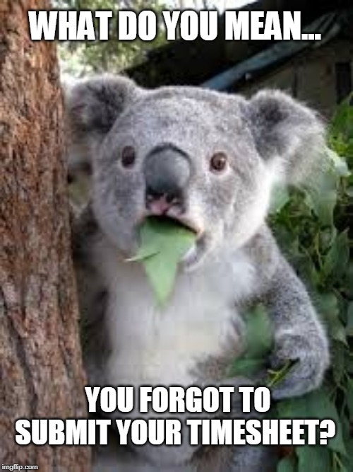 WHAT DO YOU MEAN... YOU FORGOT TO SUBMIT YOUR TIMESHEET? | image tagged in koala,leafy,timesheet reminder,timesheet meme,shook,work | made w/ Imgflip meme maker