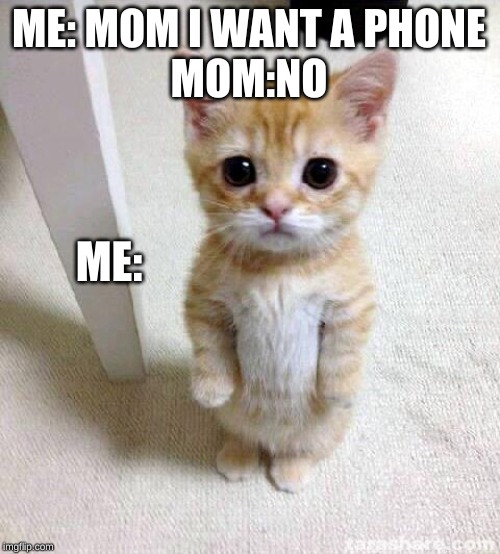 Cute Cat |  ME: MOM I WANT A PHONE  MOM:NO; ME: | image tagged in memes,cute cat | made w/ Imgflip meme maker