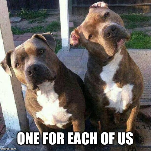 Pit bulls | ONE FOR EACH OF US | image tagged in pit bulls | made w/ Imgflip meme maker