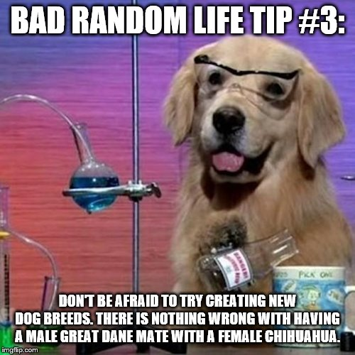 I Have No Idea What I Am Doing Dog Meme | BAD RANDOM LIFE TIP #3: DON'T BE AFRAID TO TRY CREATING NEW DOG BREEDS. THERE IS NOTHING WRONG WITH HAVING A MALE GREAT DANE MATE WITH A FEM | image tagged in memes,i have no idea what i am doing dog | made w/ Imgflip meme maker