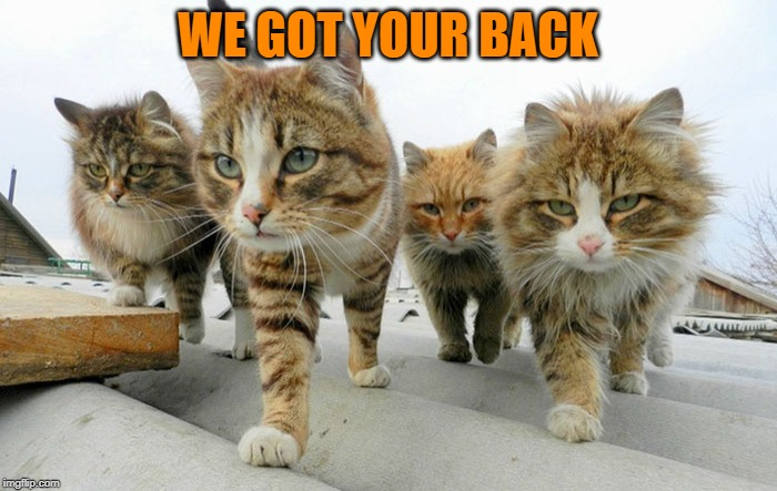 Cat gang | WE GOT YOUR BACK | image tagged in cat gang | made w/ Imgflip meme maker