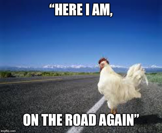 "Why the chicken Cross the road | ""HERE I AM, ON THE ROAD AGAIN"" 