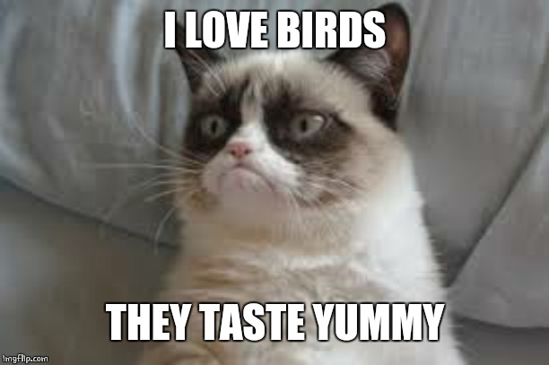 Grumpy cat | I LOVE BIRDS THEY TASTE YUMMY | image tagged in grumpy cat | made w/ Imgflip meme maker
