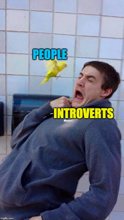 PEOPLE INTROVERTS | image tagged in yellow bird's revenge | made w/ Imgflip meme maker