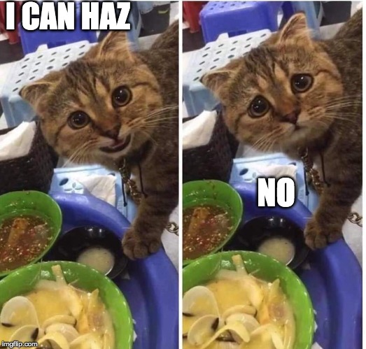 sorry kitty... | I CAN HAZ NO | image tagged in sad kitty,wants,fake,funny,cute | made w/ Imgflip meme maker