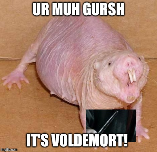 naked mole rat | UR MUH GURSH IT'S VOLDEMORT! | image tagged in naked mole rat | made w/ Imgflip meme maker