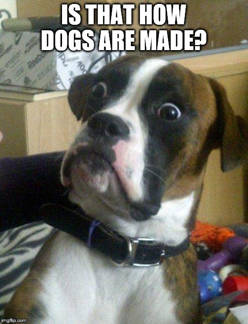 Blankie the Shocked Dog | IS THAT HOW DOGS ARE MADE? | image tagged in blankie the shocked dog | made w/ Imgflip meme maker