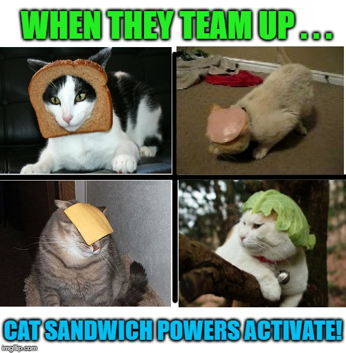 The Legion of Food | WHEN THEY TEAM UP . . . CAT SANDWICH POWERS ACTIVATE! | image tagged in blank starter pack,cat memes,funny cats,cats,funny memes,sandwich | made w/ Imgflip meme maker