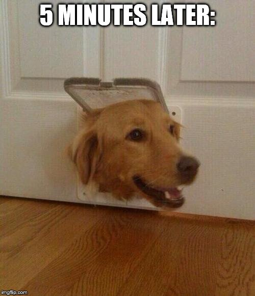Dog door | 5 MINUTES LATER: | image tagged in dog door | made w/ Imgflip meme maker