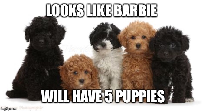 LOOKS LIKE BARBIE WILL HAVE 5 PUPPIES | made w/ Imgflip meme maker