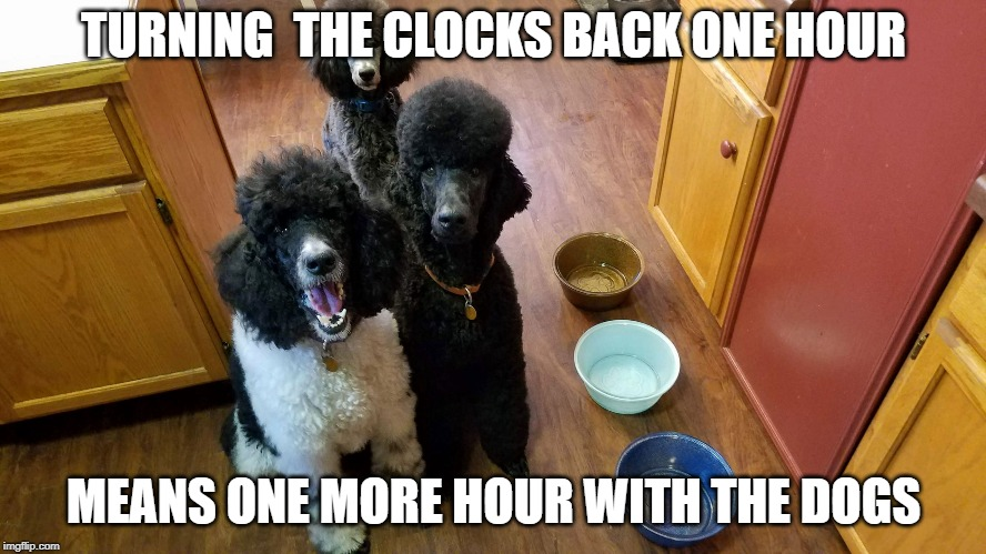 TURNING  THE CLOCKS BACK ONE HOUR; MEANS ONE MORE HOUR WITH THE DOGS | image tagged in dog dinnertime | made w/ Imgflip meme maker