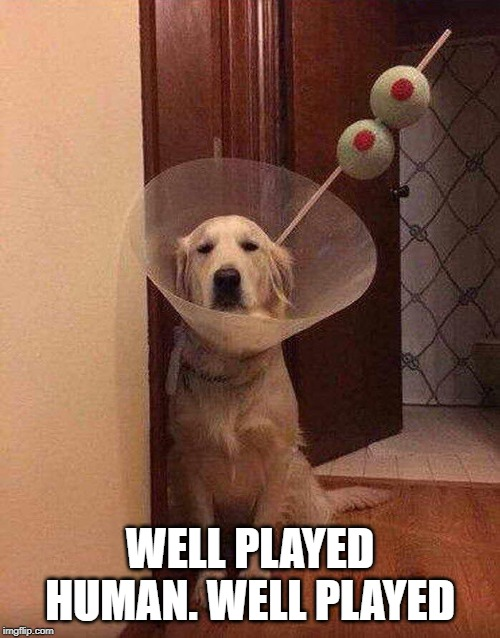 Dog-tail | WELL PLAYED HUMAN. WELL PLAYED | image tagged in dog cocktail,dog,funny animals,humanity | made w/ Imgflip meme maker