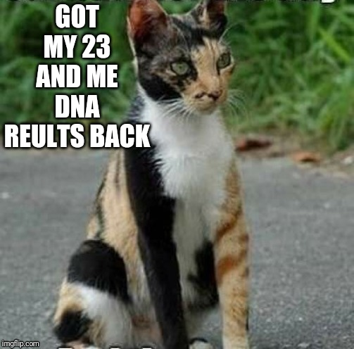 U name it, its in there | GOT MY 23 AND ME DNA REULTS BACK | image tagged in cats | made w/ Imgflip meme maker