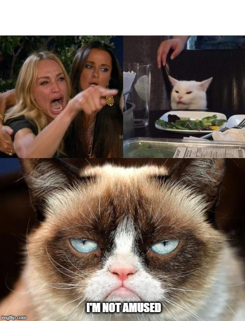 Image tagged in memes,grumpy cat not amused,woman yelling ...