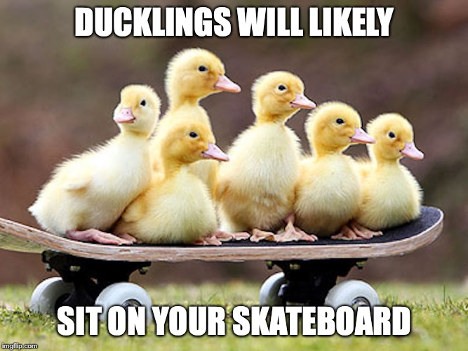 Ducklings on Skateboard | DUCKLINGS WILL LIKELY SIT ON YOUR SKATEBOARD | image tagged in duckling,skateboard,memes | made w/ Imgflip meme maker