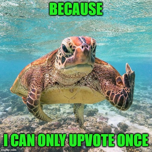 Pissed Off Turtle | BECAUSE I CAN ONLY UPVOTE ONCE | image tagged in pissed off turtle | made w/ Imgflip meme maker