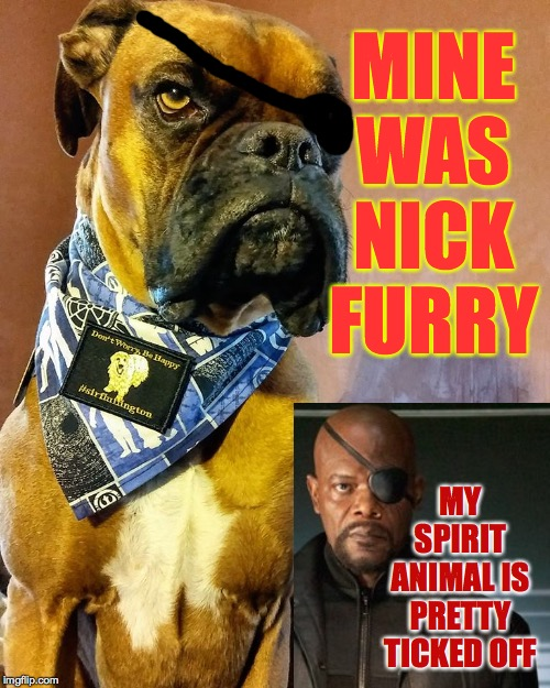 Grumpy Dog | MINE WAS NICK FURRY MY SPIRIT ANIMAL IS PRETTY TICKED OFF | image tagged in grumpy dog | made w/ Imgflip meme maker