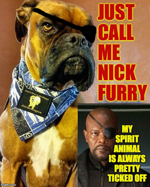 On second thought, don't call me. |  JUST CALL ME NICK FURRY; MY SPIRIT ANIMAL IS ALWAYS PRETTY TICKED OFF | image tagged in grumpy dog,memes,nick fury,spirit animal | made w/ Imgflip meme maker