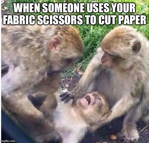 Shocked monkey | WHEN SOMEONE USES YOUR FABRIC SCISSORS TO CUT PAPER | image tagged in shocked monkey | made w/ Imgflip meme maker